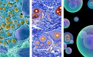 Projeto internacional mapeia todas as células do corpo humano