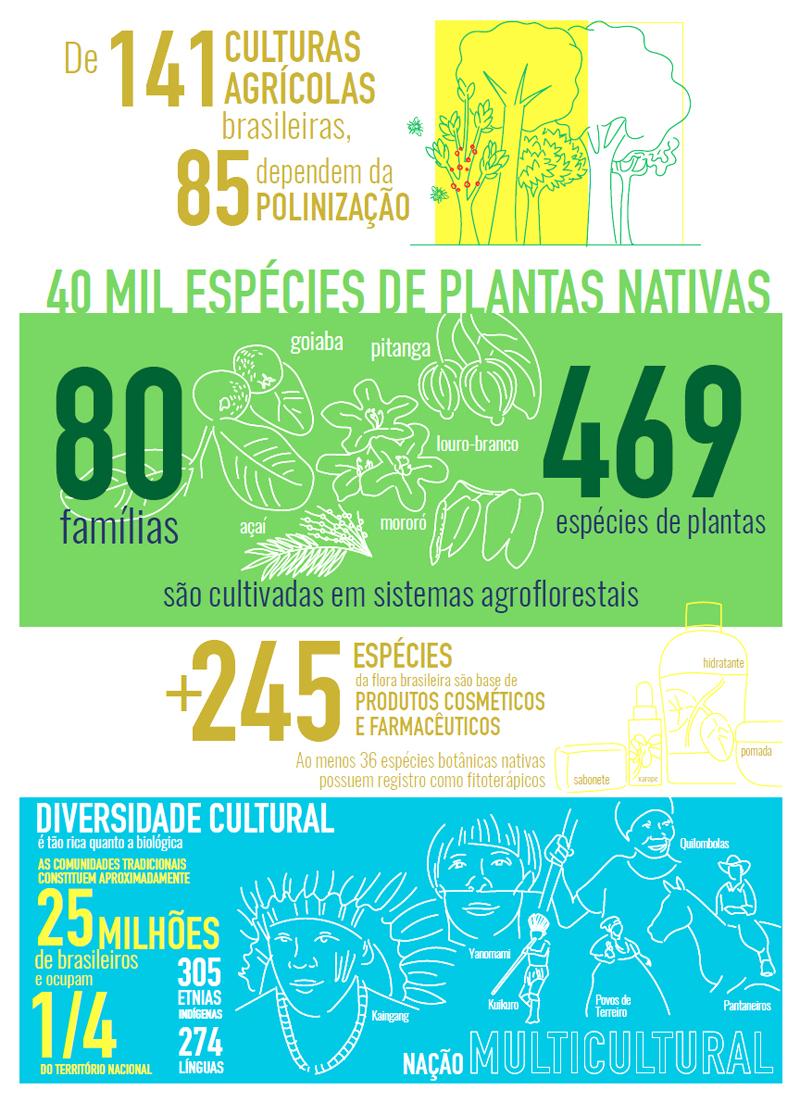Brasil desperdiça o potencial de sua biodiversidade, um ativo único e inigualável 5
