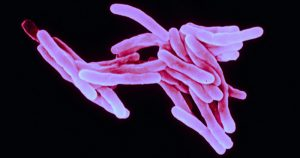 Estudo em presídios vai traçar perfil da tuberculose resistente