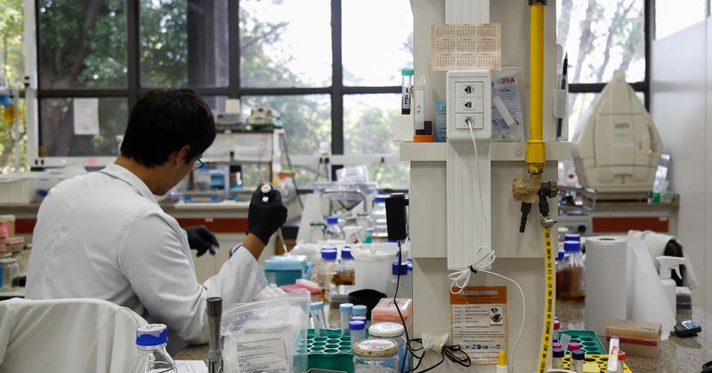 Genes que formam vasos podem ajudar a prever evolução do câncer de mama