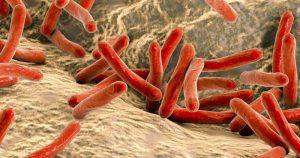 Cai em 8% o número de mortes por tuberculose no País em uma década
