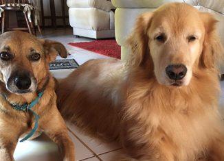 O professor explicou que cães e gatos não são hospedeiros do novo coronavírus, ou seja, não o contraem e nem o transmitem - Foto: Marcia Blasques