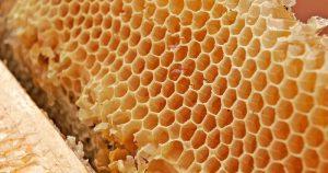 Pesquisadoras criam suplemento vegetariano à base de mel em pó e proteína do arroz