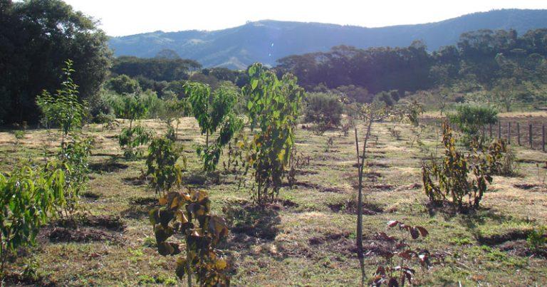 Plantio de árvores nativas para a recuperação de uma mata ciliar em Extrema,MG. Crédito: arquivo pessoal do pesquisador