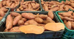 Alimento produzido na USP é doado a famílias de Piracicaba