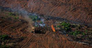 Pedro Côrtes analisa questão ambiental brasileira após vitória de Biden