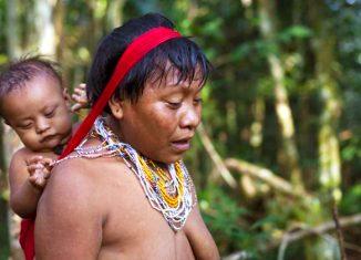 Uma das principais estratégias ancestrais dos Yanomamis do rio Marauiá, no Amazonas, é a saída das aldeias e o refúgio na floresta. - Foto: Sam Valadi