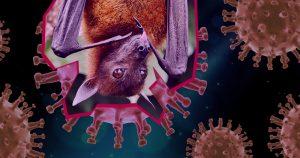 Covid-19: como o vírus saltou de morcegos para humanos