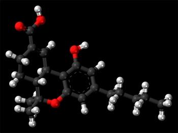 Estudo investiga os efeitos do uso de canabinoides em ratos que sofrem de TEPT - Imagem: Wikimedia Commons
