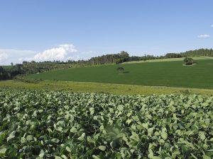 Impactos ambientais das atividades rurais no Brasil