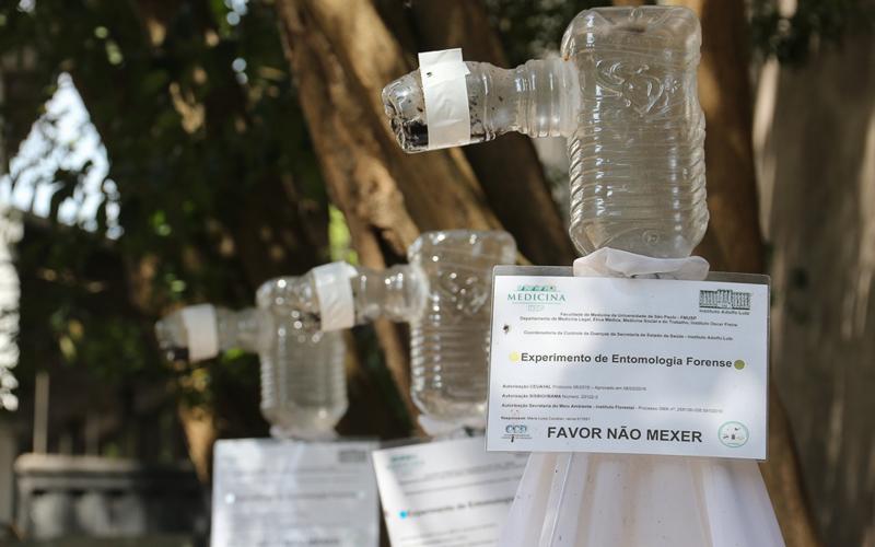 Armadilha para o experimento de entomologia forense com carcaça de porco - Foto: Cecília Bastos/USP Imagens