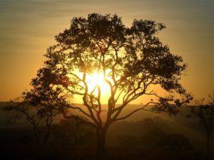 Degradação do Cerrado e erosão dos solos em áreas agrícolas preocupam