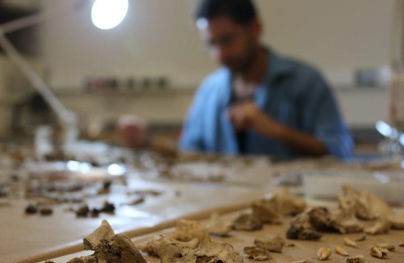 Pesquisador Anderson Tognoli do MAE fazendo análise de material arqueotaunístico de restos animais em sítios arqueológicos. Foto: Cecília Bastos/USP Imagem