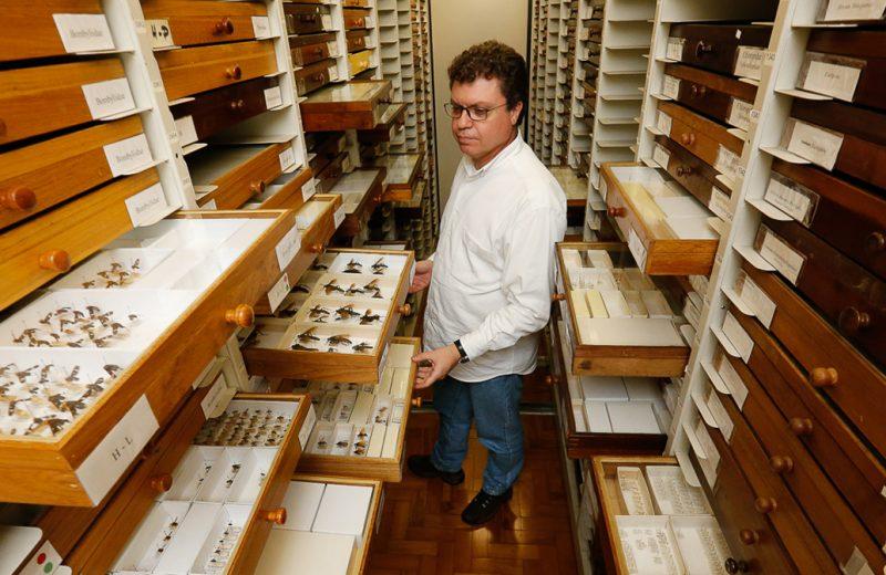 O professor Carlos José Einicker Lamas na coleção de Diptera (moscas) do Museu de Zoologia - Foto: Cecília Bastos / USP Imagens