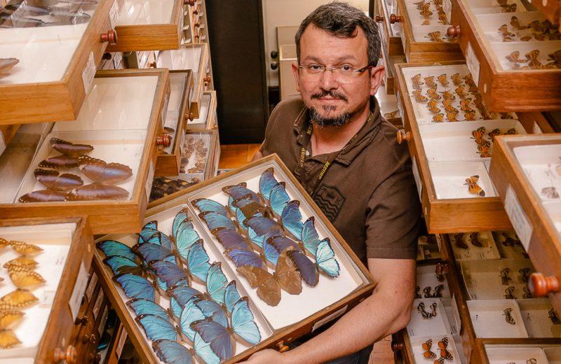 O vice-diretor do Museu de Zoologia, Marcelo Duarte da Silva, em meio à coleção de lepidópteros (borboletas e mariposas) - Foto: Cecília Bastos / USP Imagens