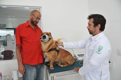 Scooby, o xodó da família de Rafael Duarte | Foto: Cecília Bastos