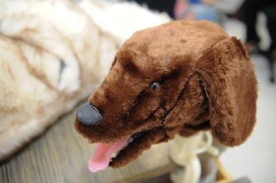 Cabeça de entubação canina | Foto: Marcos Santos/USP Imagens